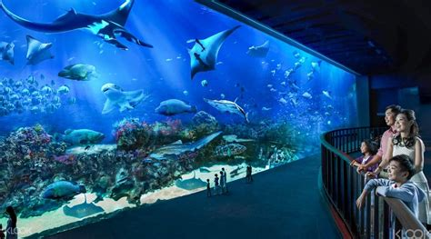 the sea aquarium s e a aquarium ticket sentosa singapore klook