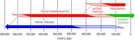 evolution of modern humans heidelbergensis