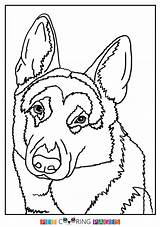 Shepherd German Coloring Pages Dog Dogs Colouring Shepherds Sheets Books Colors Sheet Baby Cute Template sketch template