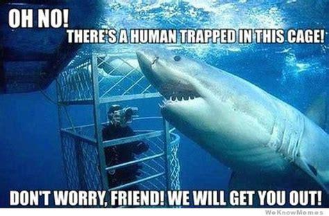 Shark Memes - gallery shark meme excuse me
