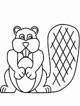 Beaver Coloring 1604 Printable Animals Kb sketch template