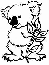 Koala Coloring Pages Cartoon sketch template
