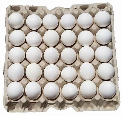 Eggs Farm Dozen Tray Chicken Fresh