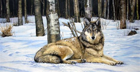 1080p Lone Wolf Hd Wallpaper by Lone Wolf Wallpapers Wallpaper Cave