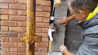 Cat Construction Stuck Worker Brickwork Kitty Reddit