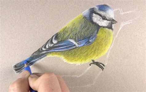 pastel pencils   draw  bird