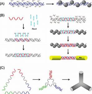 Dna As A Metallization Template   A  Metal Particles