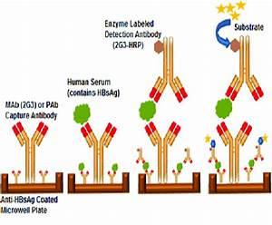 P24 Antigen Diagram