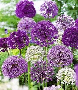 Blühende Pflanzen Winterhart : 17 best ideas about bl hende str ucher winterhart on ~ Michelbontemps.com Haus und Dekorationen