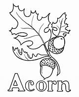 Acorn Coloring Pages Drawing Oak Leaf Line Printable Leaves Wood Burning Template Pre Acorns Tree Sheet Alphabet Patterns Google Pattern sketch template