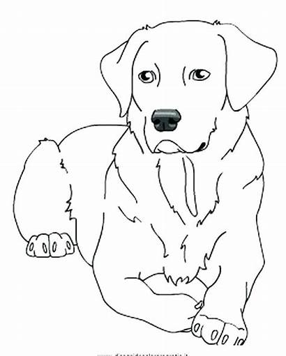 Coloring Labrador Lab Pages Puppy Drawing Dog