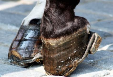 beat  navicular disease  horses   resource