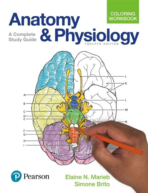 calameo anatomy  physiology coloring workbook  complete study guide  edition
