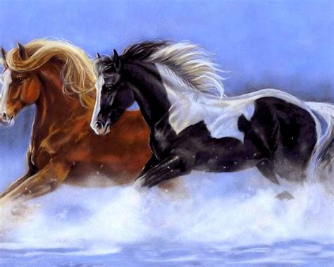 black  white  red horse galloping  water