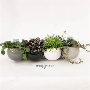 Cache Pot Plante : cache pot magn tique 8cm noir mat riel mur v g ~ Teatrodelosmanantiales.com Idées de Décoration