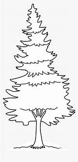 Tree Coloring Pine Forest Clipart Addams Snowman Preschoolers Google Drawing Golfrealestateonline sketch template