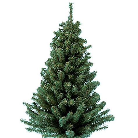 artifical trees with highest tip count mini pine tree artificial table top home office decor trees 86131598869 ebay