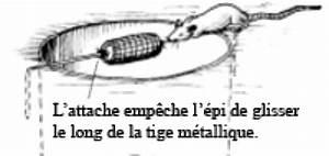 Comment Tuer Un Rat : comment tuer des rats dans un poulailler taupier sur la ~ Mglfilm.com Idées de Décoration