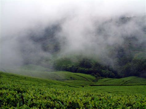 picnic spots in tamil nadu travel to the picturesque town of theni nativeplanet