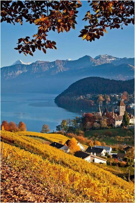 Vineyard Spiez Switzerland Switzerland Places To Visit