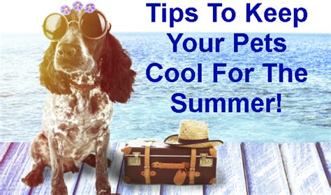 tips    pets cool   summer poundstretcher