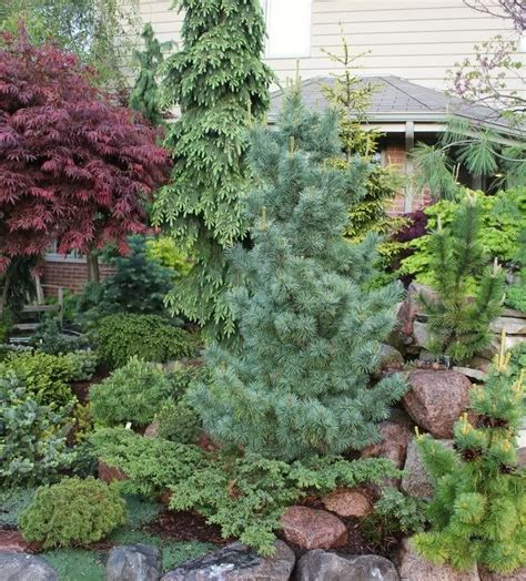 17 best images about front yard conifer ideas on