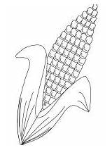 Corn Coloring Pages Vegetables sketch template