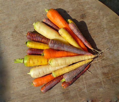 couleur cuisine blanche où trouver des carottes de couleurs variées jardissimo