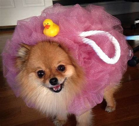 dog loofah costume   hunt