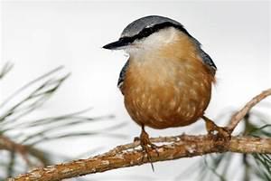 Vögel Im Winter Kindergarten : stunde der winterv gel nabu nrw ~ Whattoseeinmadrid.com Haus und Dekorationen