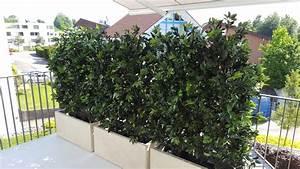 Pflanzen Sichtschutz Balkon : ilex hecke balkon sichtschutz premium kunstpflanzen dekohaus ag ~ Eleganceandgraceweddings.com Haus und Dekorationen