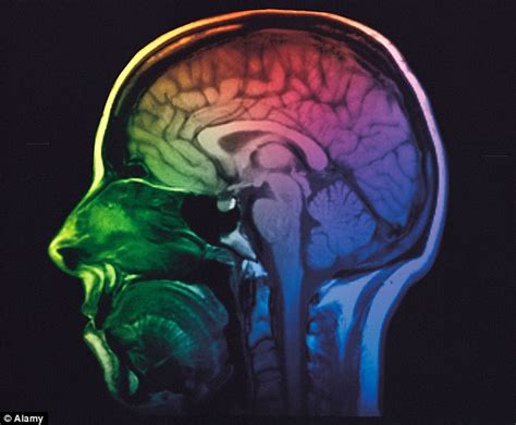 Short-Term Memory Brain