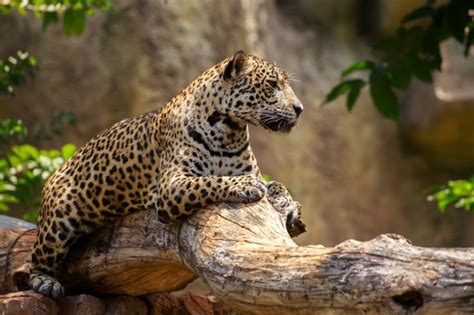 How Are Jaguars Endangered by New Book Quot Deadzone Quot Explores How Factory Farming Hurts