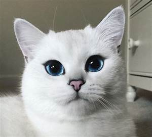 Meet Coby – the most beautiful cat in the world