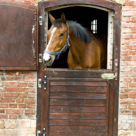 pferd im stall kuechen accessoires magnetsticker tiere
