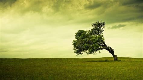 Green Tree Hd Wallpaper by Wallpaper Proslut Hd Tree Background Wallpapers Free