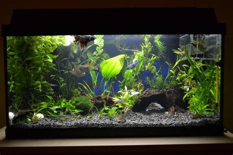 substrate for aquarium plants black aquarium substrate sand gravel 2 5mm ideal for plants eur 14 99 picclick fr