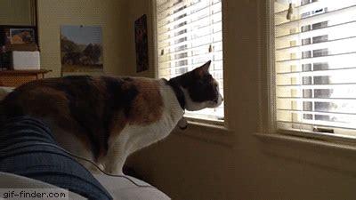 cat jump fail gif  gif images