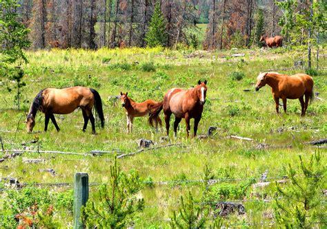 reptiles logan horses lake mammals near 2009