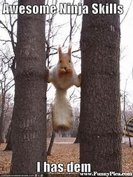 Squirrels Captions Funny Animal Memes