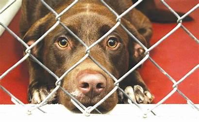 Pets Danger Future Shelter Vet Puts Lack