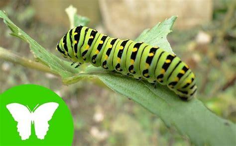 animales invertebrados  son informacion nombres