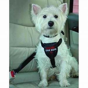 Voiture Pour Chien : attache et harnais voiture pour chien ceinture securite voiture pour chien ~ Medecine-chirurgie-esthetiques.com Avis de Voitures