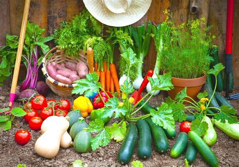 indoor mini greenhouse 5 vegetable gardening tips that will save your