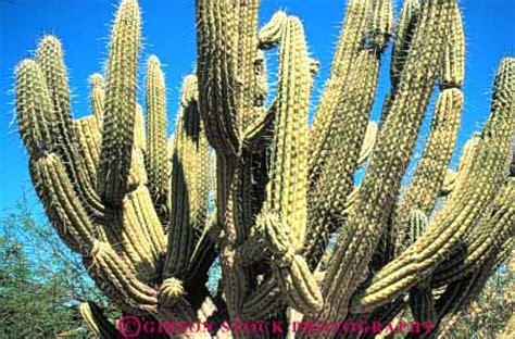 cactus arizona stock photo