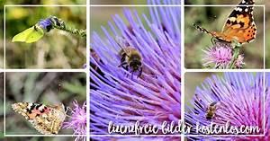 Bilder Kaufen Günstig : bilder online kaufen lizenzfreie fotos g nstig kaufen ~ Buech-reservation.com Haus und Dekorationen