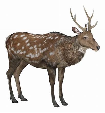 Deer Sika Male Winter Wikia Zt2
