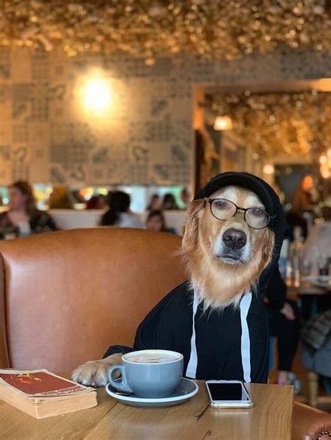 22 Hilariously Adorable Pictures Of A Dog And His Owner