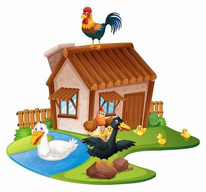 Farm Ducks Chickens Vector Scene Sheep Vecteezy