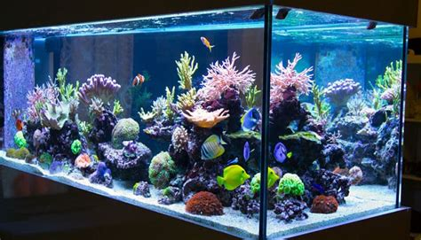como instalar  acuario en casa en  sencillos pasos